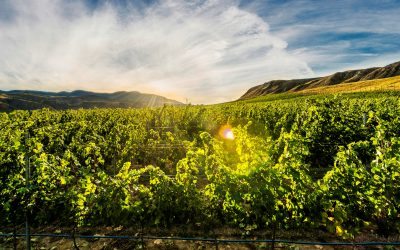 14 Medals Awarded to Kamloops Wineries